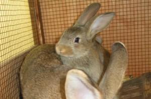 Kaninchen Hase (c) veggie-kids.de